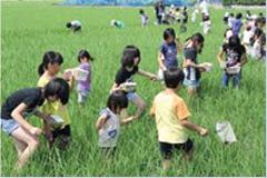 農村での制度の概要